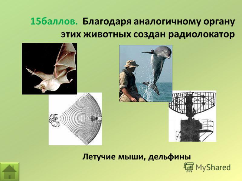 15баллов. Благодаря аналогичному органу этих животных создан радиолокатор Летучие мыши, дельфины