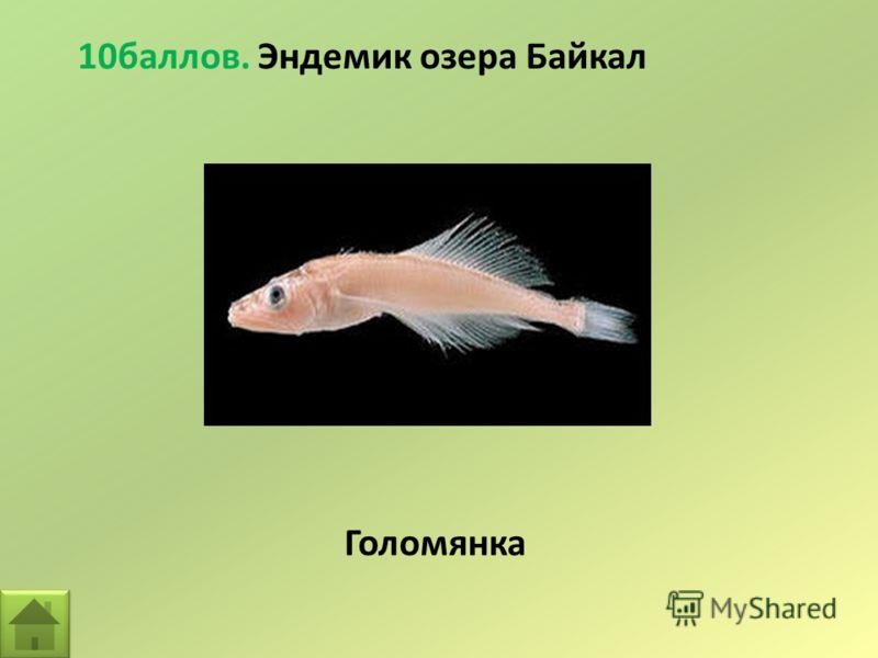10баллов. Эндемик озера Байкал Голомянка
