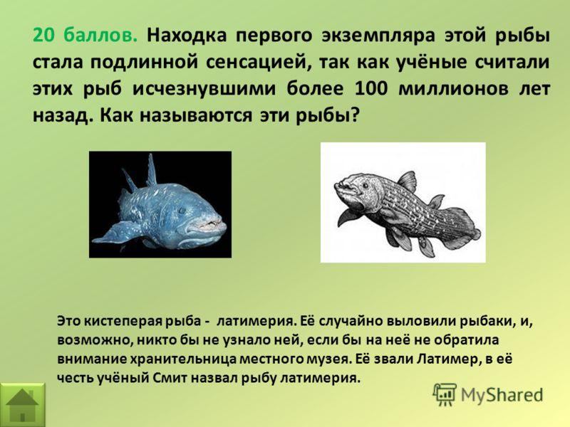 20 баллов. Находка первого экземпляра этой рыбы стала подлинной сенсацией, так как учёные считали этих рыб исчезнувшими более 100 миллионов лет назад. Как называются эти рыбы? Это кистеперая рыба - латимерия. Её случайно выловили рыбаки, и, возможно,