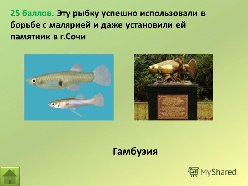 25 баллов. Эту рыбку успешно использовали в борьбе с малярией и даже установили ей памятник в г.Сочи Гамбузия