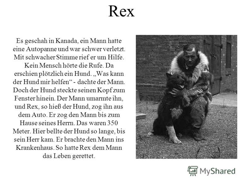 Rex Es geschah in Kanada, ein Mann hatte eine Autopanne und war schwer verletzt. Mit schwacher Stimme rief er um Hilfe. Kein Mensch hörte die Rufe. Da erschien plötzlich ein Hund. Was kann der Hund mir helfen - dachte der Mann. Doch der Hund steckte
