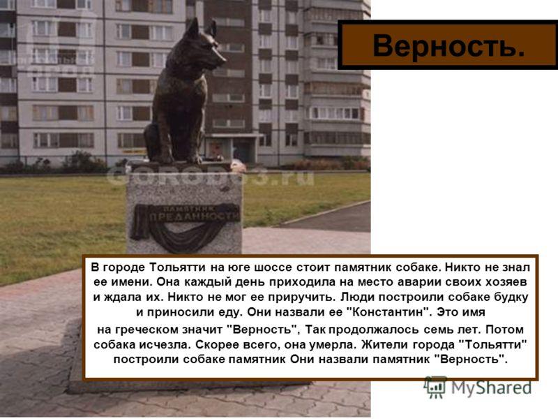 Верность. В городе Тольятти на юге шоссе стоит памятник собаке. Никто не знал ее имени. Она каждый день приходила на место аварии своих хозяев и ждала их. Никто не мог ее приручить. Люди построили собаке будку и приносили еду. Они назвали ее