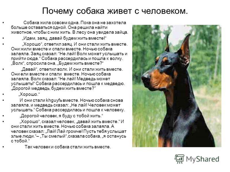Почему собака живет с человеком. Собака жила совсем одна. Пока она не захотела больше оставаться одной. Она решила найти животное, чтобы с ним жить. В лесу она увидела зайца. Идем, заяц, давай будем жить вместе! Хорошо, ответил заяц. И они стали жить