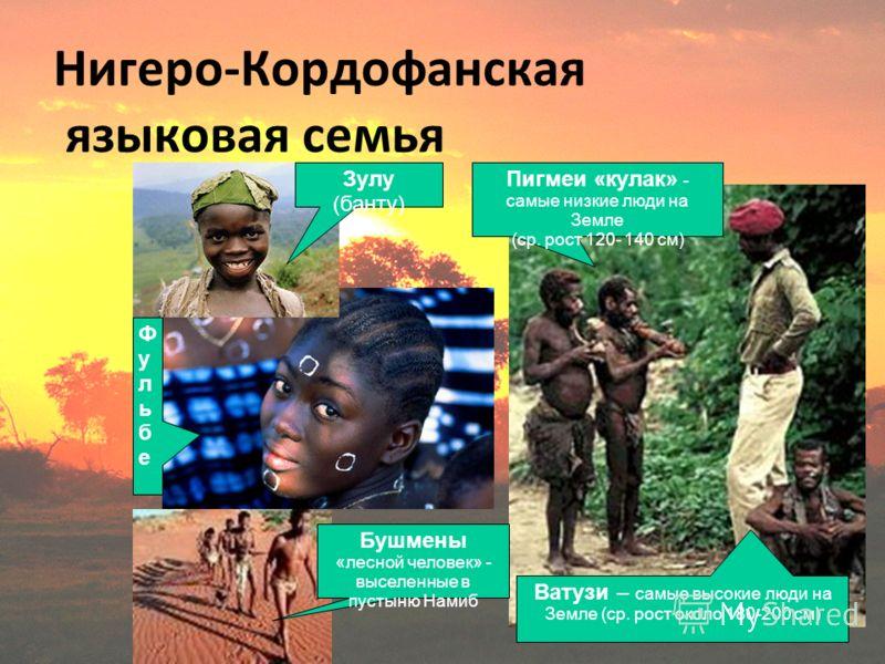 Нигеро-Кордофанская языковая семья Зулу (банту) Пигмеи «кулак» - самые низкие люди на Земле (ср. рост 120- 140 см) Ватузи – самые высокие люди на Земле (ср. рост около 180-200 см) Бушмены «лесной человек» - выселенные в пустыню Намиб ФульбеФульбе