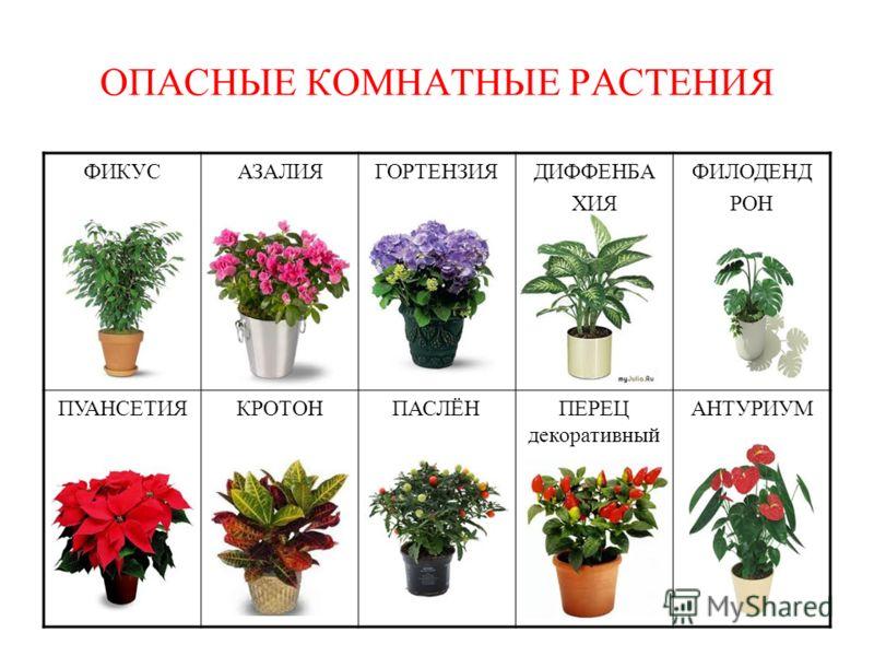 Полезные цветы для дома - какие комнатные цветы должны