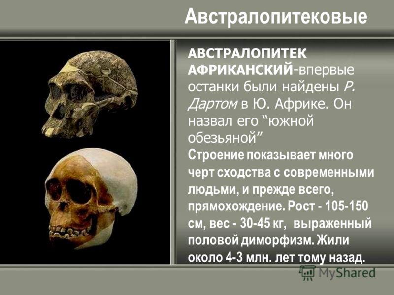 Австралопитековые АВСТРАЛОПИТЕК АФРИКАНСКИЙ -впервые останки были найдены Р. Дартом в Ю. Африке. Он назвал его южной обезьяной Строение показывает много черт сходства с современными людьми, и прежде всего, прямохождение. Рост - 105-150 см, вес - 30-4