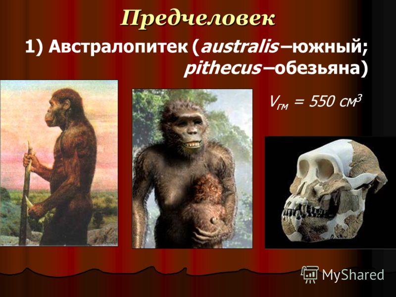 Предчеловек 1) Австралопитек (australis –южный; pithecus –обезьяна) V гм = 550 см 3