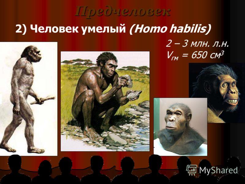 Предчеловек 2) Человек умелый (Homo habilis) 2 – 3 млн. л.н. V гм = 650 см 3