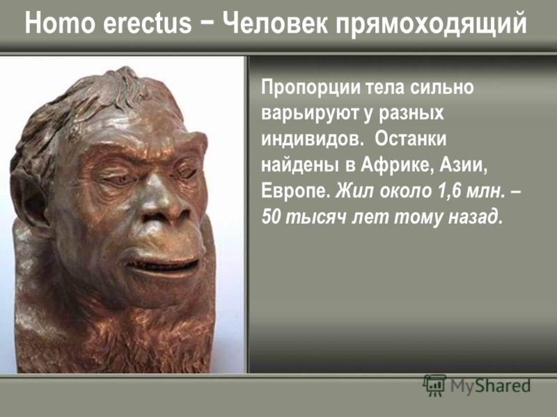 Homo erectus Человек прямоходящий Пропорции тела сильно варьируют у разных индивидов. Останки найдены в Африке, Азии, Европе. Жил около 1,6 млн. – 50 тысяч лет тому назад.