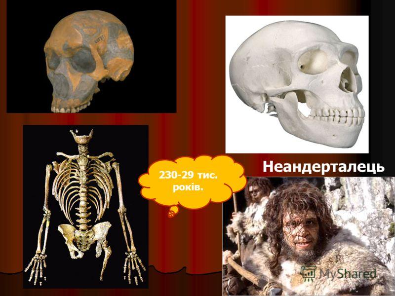 Неандерталець 230-29 тис. років.