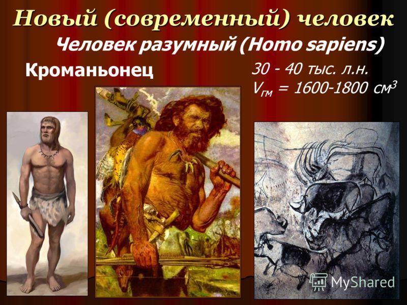 Новый (современный) человек 30 - 40 тыс. л.н. V гм = 1600-1800 см 3 Кроманьонец Человек разумный (Homo sapiens)