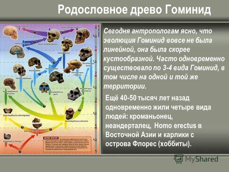 Родословное древо Гоминид Сегодня антропологам ясно, что эволюция Гоминид вовсе не была линейной, она была скорее кустообразной. Часто одновременно существовало по 3-4 вида Гоминид, в том числе на одной и той же территории. Ещё 40-50 тысяч лет назад