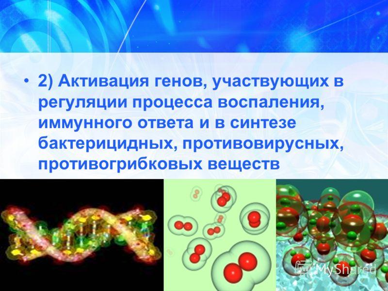 2) Активация генов, участвующих в регуляции процесса воспаления, иммунного ответа и в синтезе бактерицидных, противовирусных, противогрибковых веществ