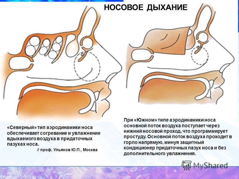 НОСОВОЕ ДЫХАНИЕ При «Южном» типе аэродинамики носа основной поток воздуха поступает через нижний носовой проход, что программирует простуду. Основной поток воздуха проходит в горло напрямую, минуя защитный кондиционер придаточных пазух носа и без доп