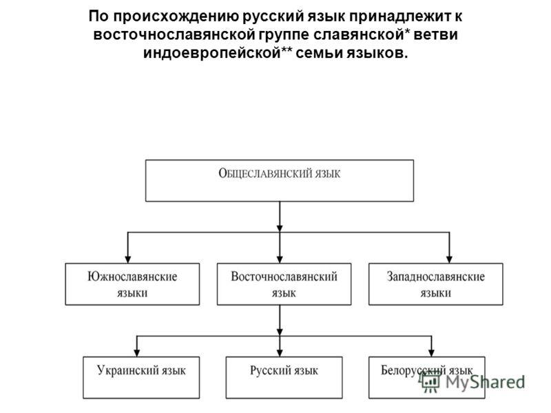 По происхождению русский язык принадлежит к восточнославянской группе славянской* ветви индоевропейской** семьи языков.