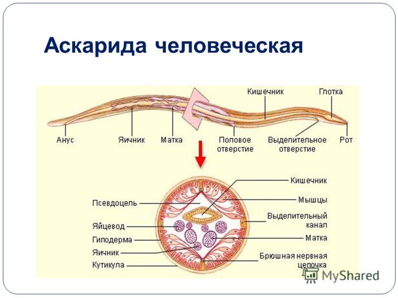 интерфикс от паразитов отзывы