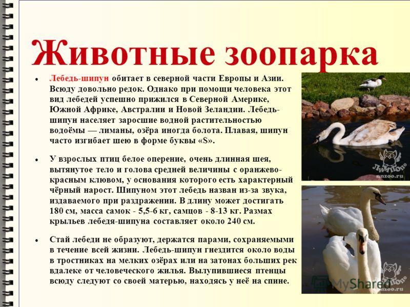 Животные зоопарка Лебедь-шипун обитает в северной части Европы и Азии. Всюду довольно редок. Однако при помощи человека этот вид лебедей успешно прижился в Северной Америке, Южной Африке, Австралии и Новой Зеландии. Лебедь- шипун населяет заросшие во