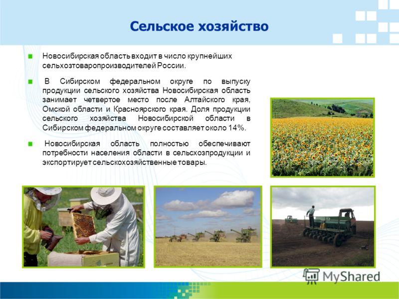 Новосибирская область входит в число крупнейших сельхозтоваропроизводителей России. В Сибирском федеральном округе по выпуску продукции сельского хозяйства Новосибирская область занимает четвертое место после Алтайского края, Омской области и Красноя