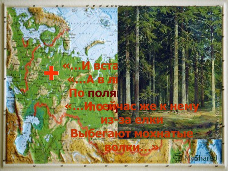 Выводы: 1. Айболит проживал и трудился в Российской Федерации в ее Европейской части на территории Восточно- Европейской или Русской равнины лиса заяц курица волки лошади «…И встал Айболит, побежал Айболит. По полям, по лесам, по лугам он бежит…» «…А