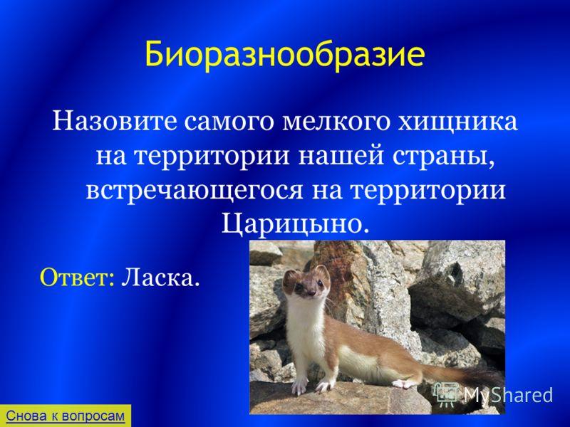 Биоразнообразие Назовите самого мелкого хищника на территории нашей страны, встречающегося на территории Царицыно. Снова к вопросам Ответ: Ласка.