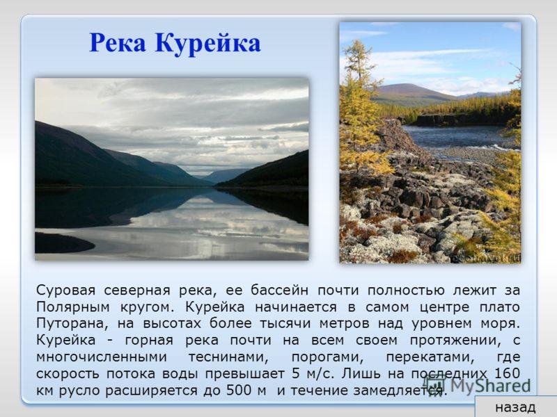 Река Курейка Суровая северная река, ее бассейн почти полностью лежит за Полярным кругом. Курейка начинается в самом центре плато Путорана, на высотах более тысячи метров над уровнем моря. Курейка - горная река почти на всем своем протяжении, с многоч