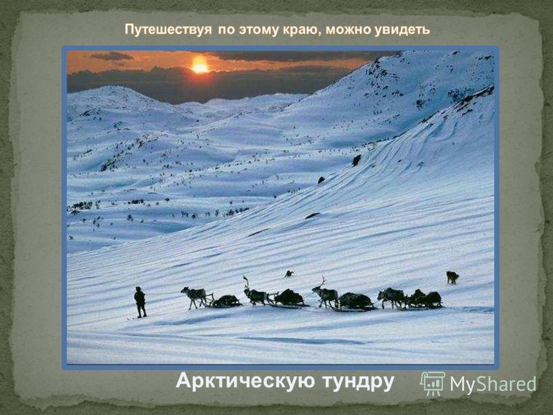 Арктическую тундру