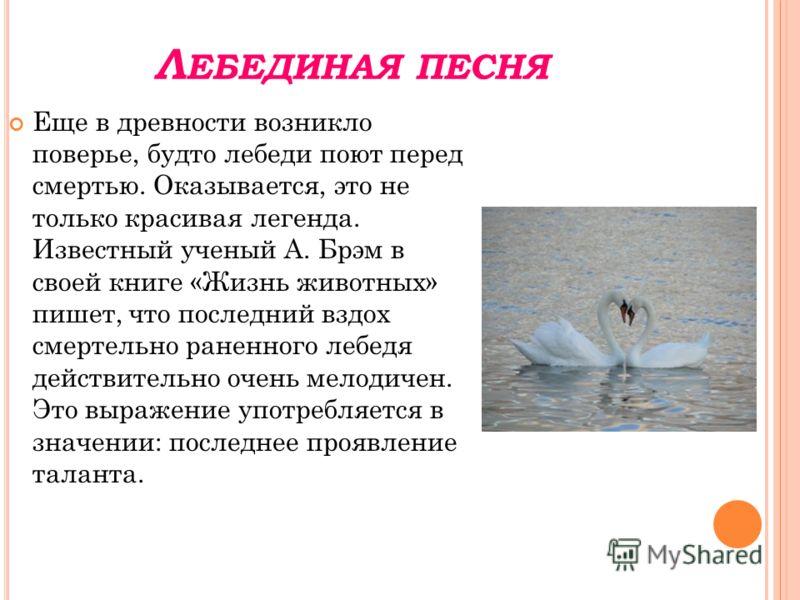 Л ЕБЕДИНАЯ ПЕСНЯ Еще в древности возникло поверье, будто лебеди поют перед смертью. Оказывается, это не только красивая легенда. Известный ученый А. Брэм в своей книге «Жизнь животных» пишет, что последний вздох смертельно раненного лебедя действител