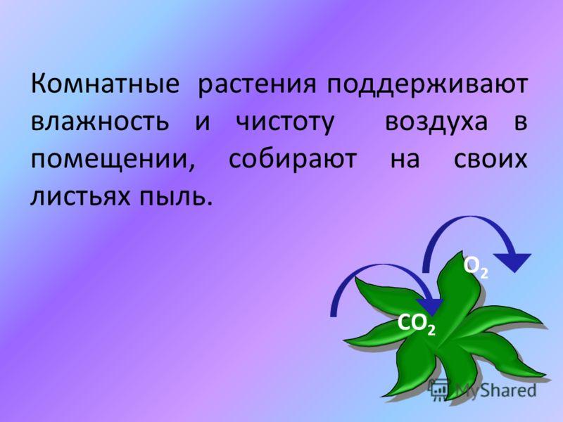 Комнатные растения поддерживают влажность и чистоту воздуха в помещении, собирают на своих листьях пыль. СО 2 О2О2