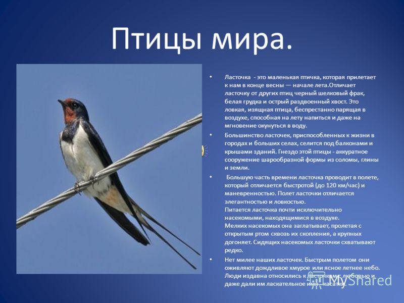 Птицы мира. Ласточка - это маленькая птичка, которая прилетает к нам в конце весны начале лета.Отличает ласточку от других птиц черный шелковый фрак, белая грудка и острый раздвоенный хвост. Это ловкая, изящная птица, беспрестанно парящая в воздухе,