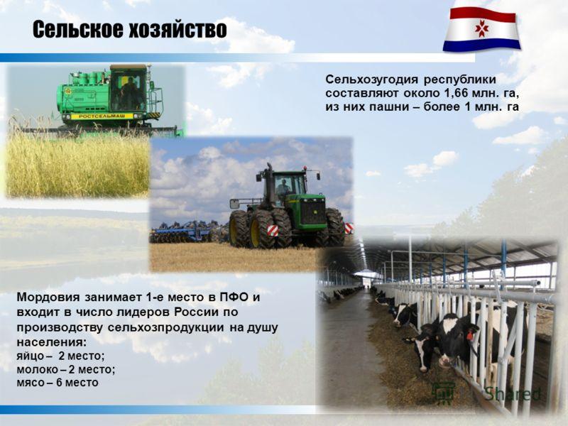 Сельхозугодия республики составляют около 1,66 млн. га, из них пашни – более 1 млн. га Мордовия занимает 1-е место в ПФО и входит в число лидеров России по производству сельхозпродукции на душу населения: яйцо – 2 место; молоко – 2 место; мясо – 6 ме