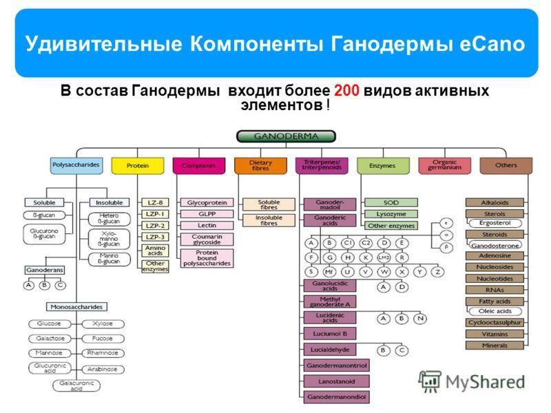 11 Удивительные Компоненты Ганодермы eCano 11 В состав Ганодермы входит более 200 видов активных элементов !