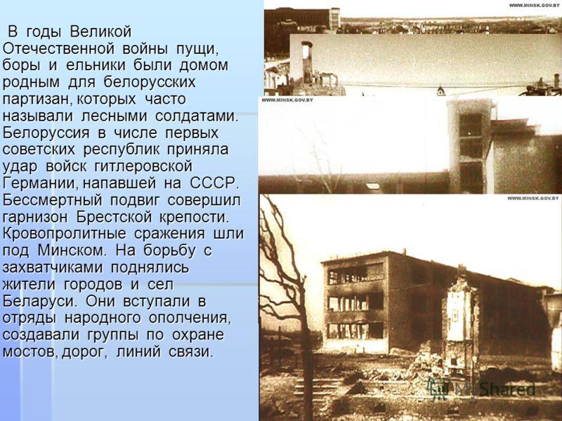 В годы Великой Отечественной войны пущи, боры и ельники были домом родным для белорусских партизан, которых часто называли лесными солдатами. Белоруссия в числе первых советских республик приняла удар войск гитлеровской Германии, напавшей на СССР. Бе