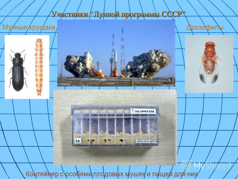 Участники Лунной программы СССР. Мучные хрущакиДрозофилы Контейнер с особями плодовых мушек и пищей для них