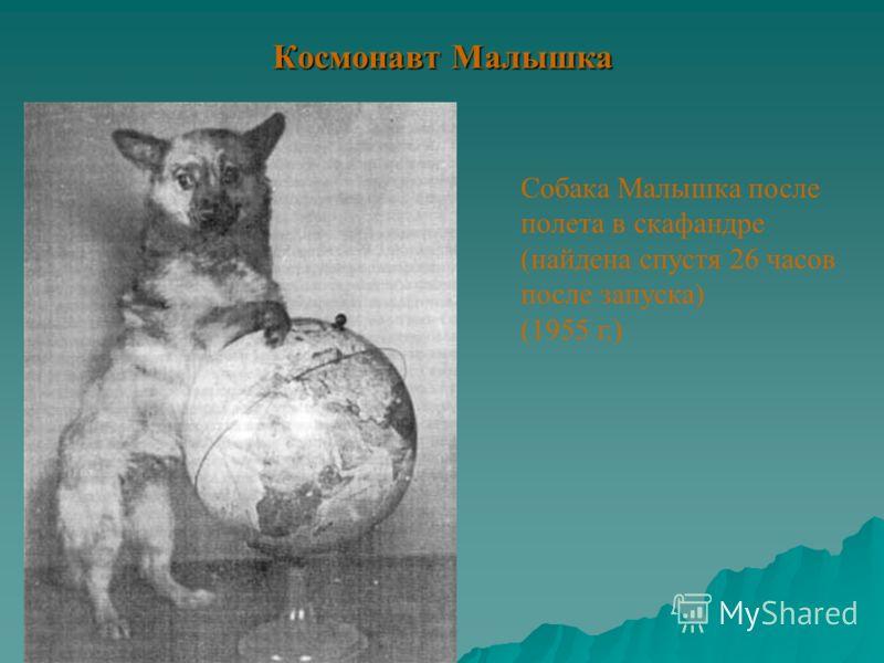 Космонавт Малышка Собака Малышка после полета в скафандре (найдена спустя 26 часов после запуска) (1955 г.)