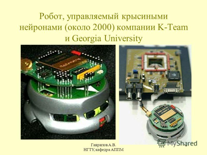 Гаврилов А.В. НГТУ, кафедра АППМ 27 Робот, управляемый крысиными нейронами (около 2000) компании K-Team и Georgia University