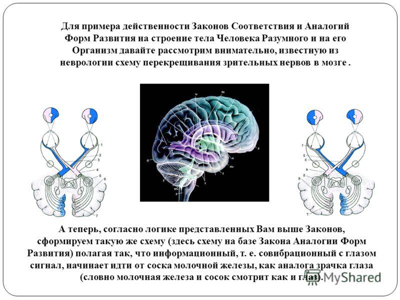 Для примера действенности Законов Соответствия и Аналогий Форм Развития на строение тела Человека Разумного и на его Организм давайте рассмотрим внимательно, известную из неврологии схему перекрещивания зрительных нервов в мозге. А теперь, согласно л