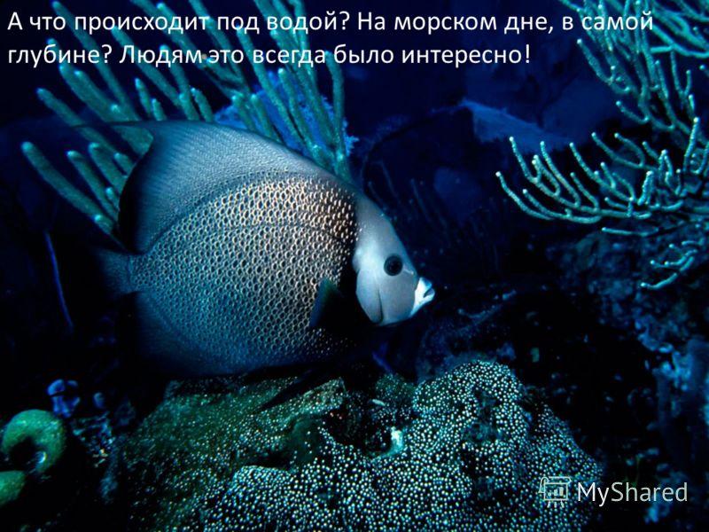 А что происходит под водой? На морском дне, в самой глубине? Людям это всегда было интересно!