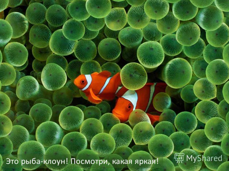Это рыба-клоун! Посмотри, какая яркая!