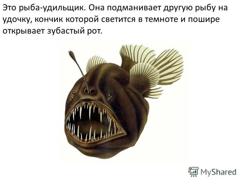 Это рыба-удильщик. Она подманивает другую рыбу на удочку, кончик которой светится в темноте и пошире открывает зубастый рот.
