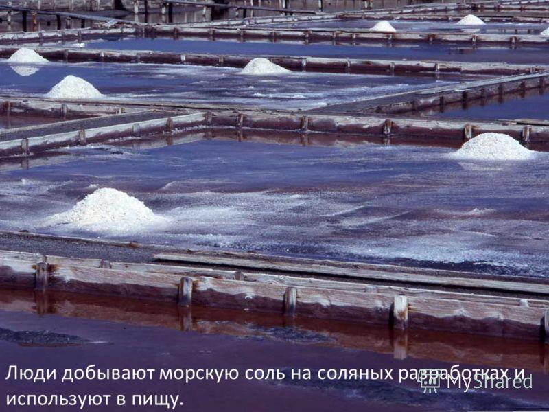 Люди добывают морскую соль на соляных разработках и используют в пищу.