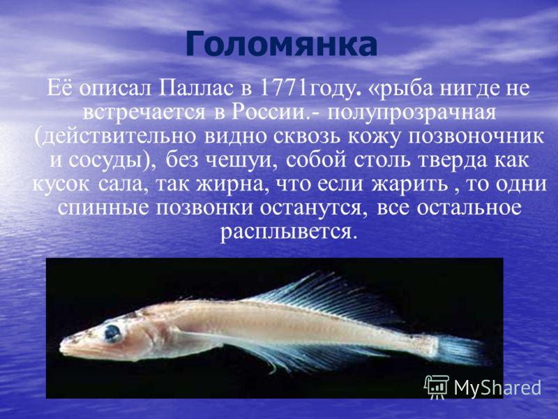 Голомянка Её описал Паллас в 1771году. «рыба нигде не встречается в России.- полупрозрачная (действительно видно сквозь кожу позвоночник и сосуды), без чешуи, собой столь тверда как кусок сала, так жирна, что если жарить, то одни спинные позвонки ост