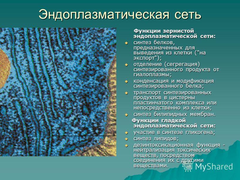 Синтез Белков В Клетке Презентация