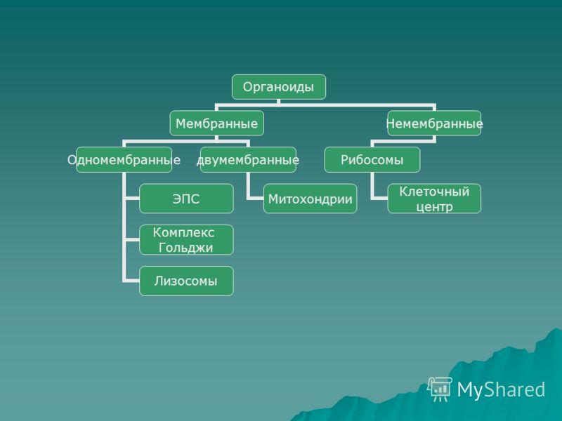 Органоиды Мембранные Одномембранные ЭПС Комплекс Гольджи Лизосомы двумембранные Митохондрии Немембранные Рибосомы Клеточный центр