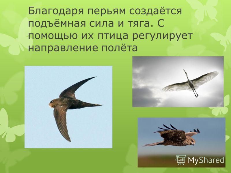 Благодаря перьям создаётся подъёмная сила и тяга. С помощью их птица регулирует направление полёта