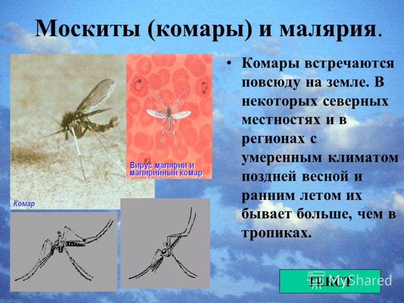 Низшие формы биологической опасности Это прежде всего беспозвоночные животные не только являющиеся переносчиками болезней, но и сами доставляющие значительные неудобства ТЕКСТ
