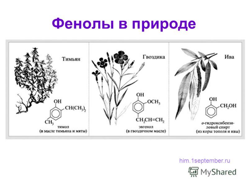 Фенолы в природе him.1september.ru