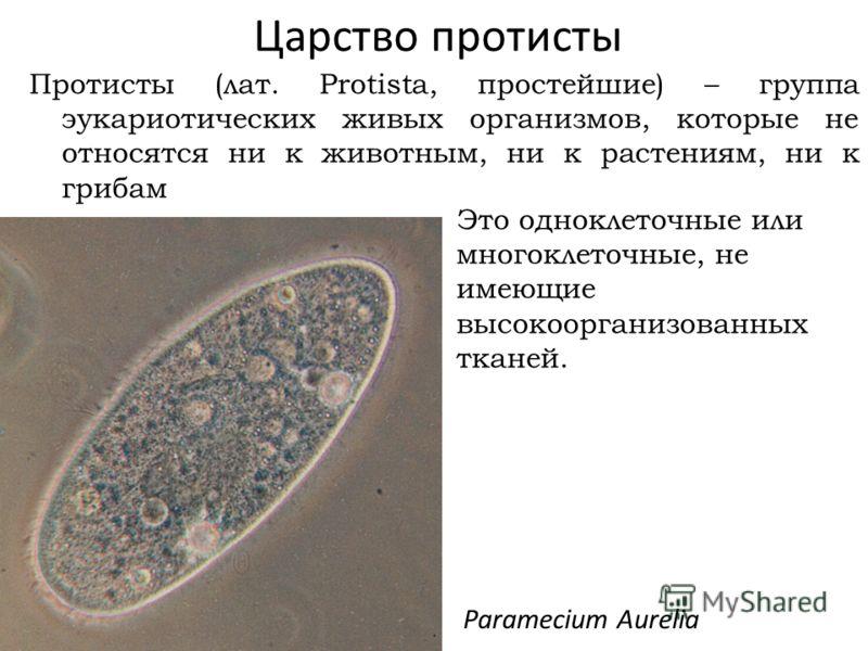 Царство протисты Протисты (лат. Protista, простейшие) – группа эукариотических живых организмов, которые не относятся ни к животным, ни к растениям, ни к грибам Paramecium Aurelia Это одноклеточные или многоклеточные, не имеющие высокоорганизованных