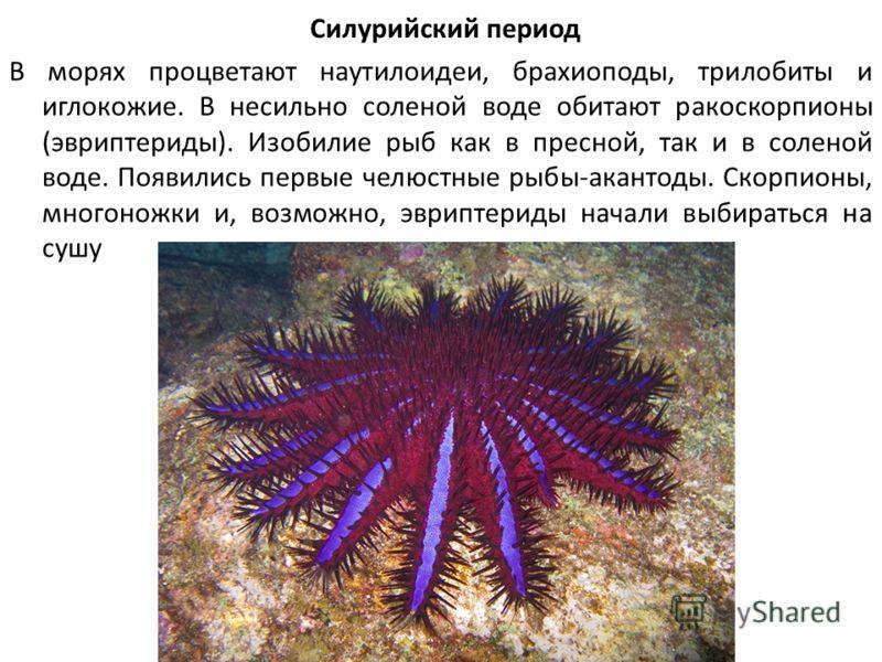 Силурийский период В морях процветают наутилоидеи, брахиоподы, трилобиты и иглокожие. В несильно соленой воде обитают ракоскорпионы (эвриптериды). Изобилие рыб как в пресной, так и в соленой воде. Появились первые челюстные рыбы-акантоды. Скорпионы,