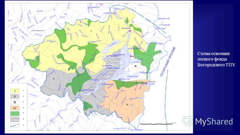 Схема освоения лесного фонда Богородского ТПУ.
