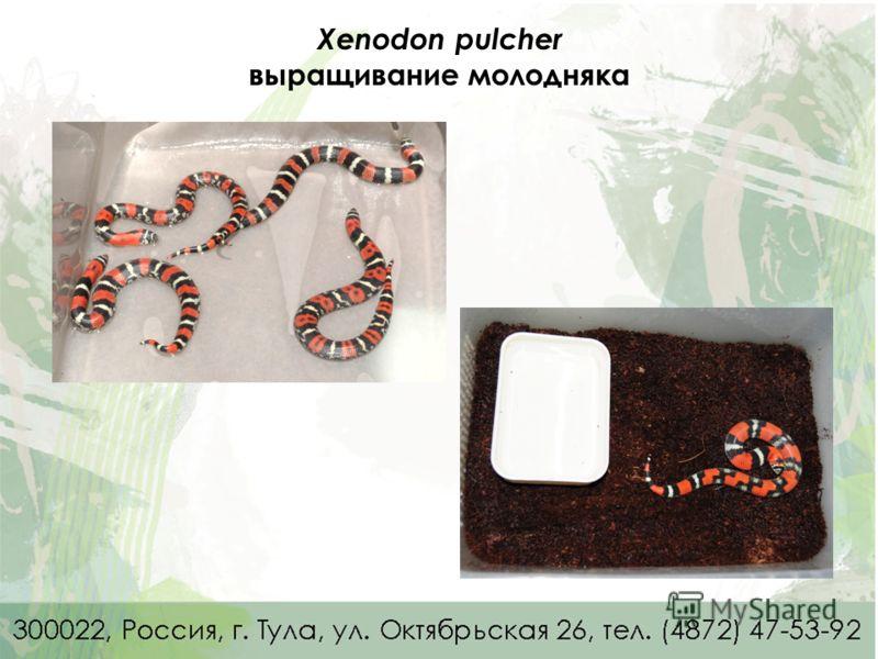Xenodon pulcher выращивание молодняка